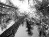 Tree Canopy 2006